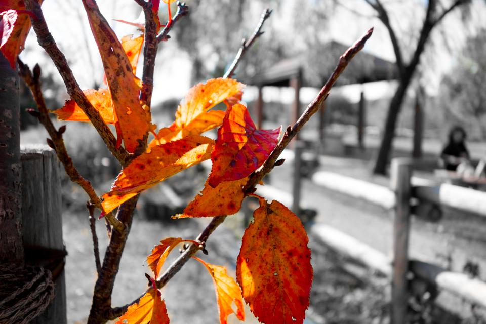 佐鳴湖の紅葉