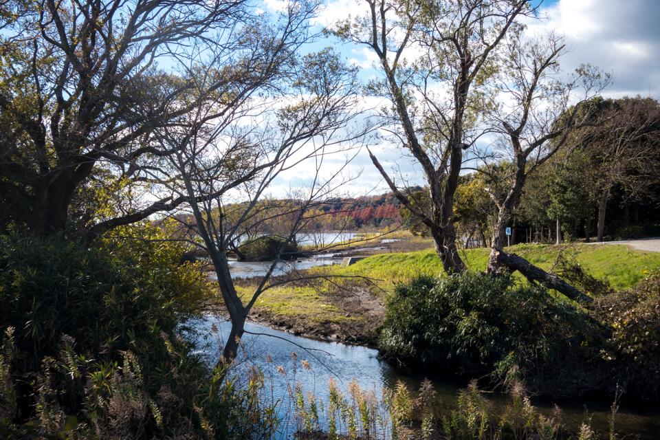 佐鳴湖の新川